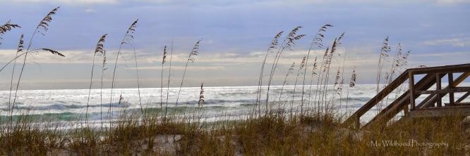 Dune Boardwalk Panoramic, Destin, Florida