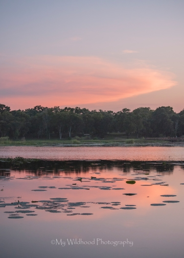 Pink Swamp Sunset, Brazos Bend State Park, Texas