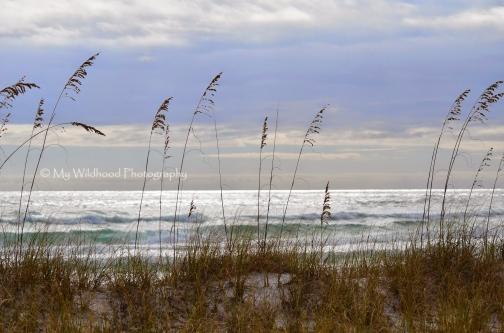 Dun Grass, Destin, Florida