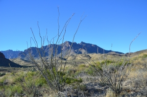 Ocotillo and Mountains, Big Bend National Park, Texas