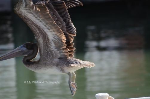 Taking Flight, Galveston, Texas