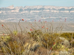 Sierra del Carmens and Ocotillo, Big Bend National Park, Texas