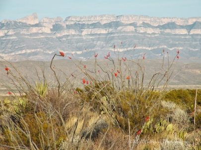 Sierra del Carmens and Ocotillo, Big Bend National Park, Texas