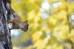 Curious Squirrel, Toronto, Ontario
