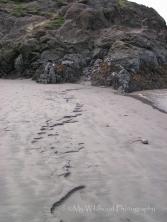 Water Erosion, Beluga Point, Anchorage, Alaska